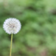 How to Manage Your Allergy Symptoms