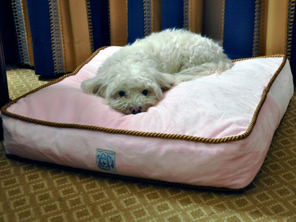 The Langham Huntington Pasadena Introduces It S New Doggie
