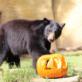 Halloween Zoo-tacular at the OC Zoo