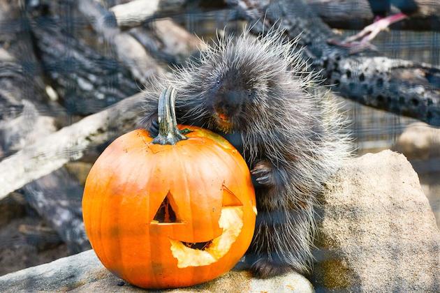Halloween Zoo-tacular