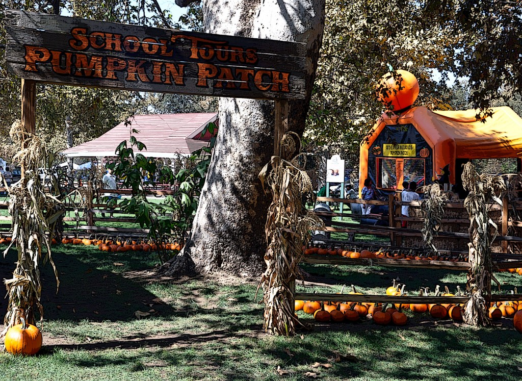 Pumpkin Patch at Irvine Park Railroad