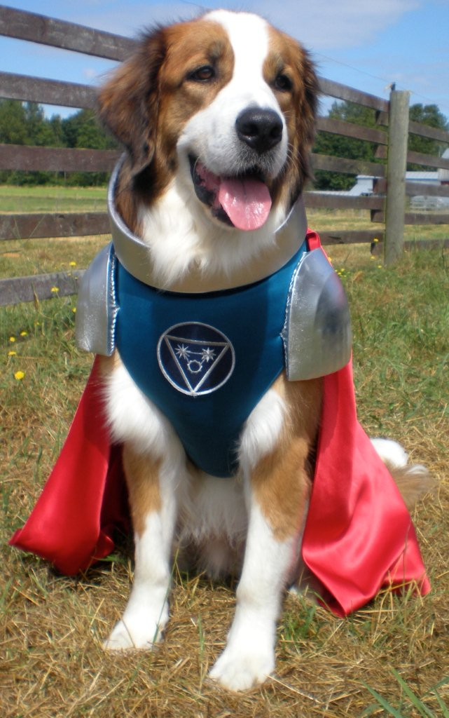 What Breed Of Dog Is Captain Canine In Super Buddies