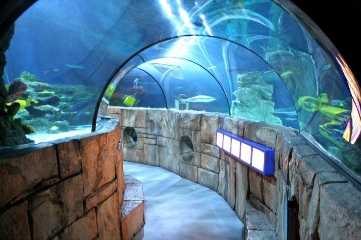 Aquarium near me aquarium store near me shopping on for Saltwater fish for sale near me