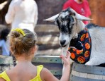 Petting Zoo at Disneyland