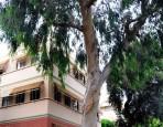 Trees at Walt Disney Studios