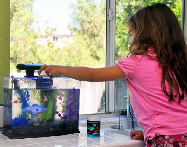 How To Care For Glofish
