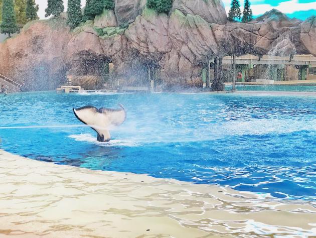 Orca Tale