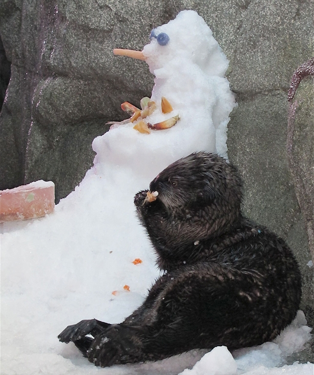 Otter & Snowman - Aquarium of the Pacific