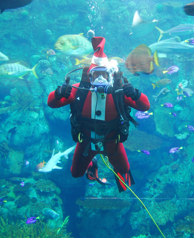 Santa Diver - Aquarium of the Pacific