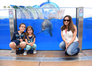 Dolphin at SeaWorld