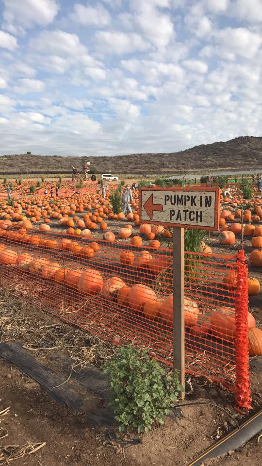 Pumpkin Patch at Tanaka Farms