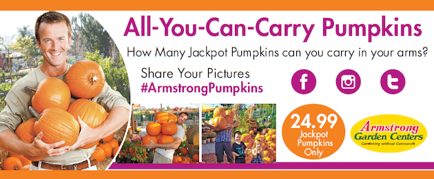 All You Can Carry Pumpkins