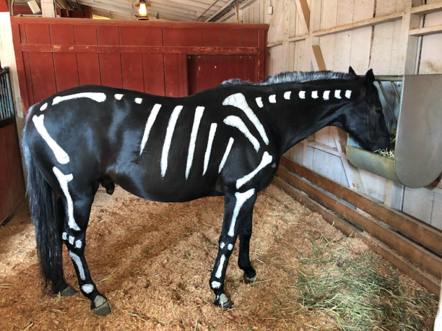 Horse Knotts Berry Farm