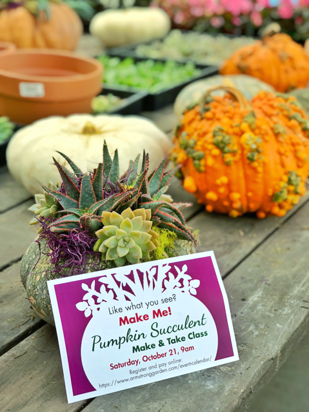 Make and Take Pumpkin Succulent Planter