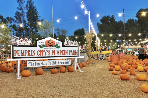 Pumpkin City Pumpkin Farm