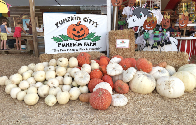 Pumpkin City Pumpkins