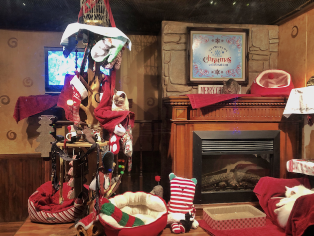 Cats Christmas Parlor