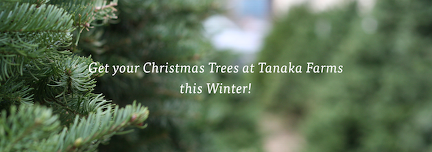 Christmas Trees at Tanaka Farms