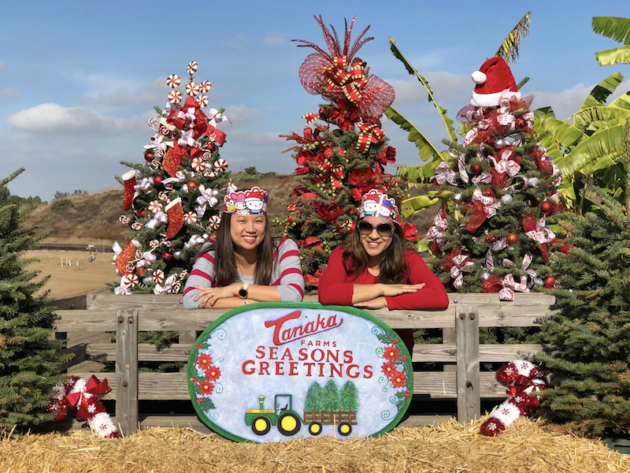 Christmas at Tanaka Farms