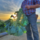 Farming in California – What it Takes To Feed a Nation