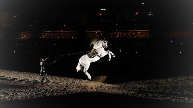 Horse at Medieval Times