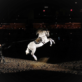Medieval Times Debuts New Show At Buena Park Castle