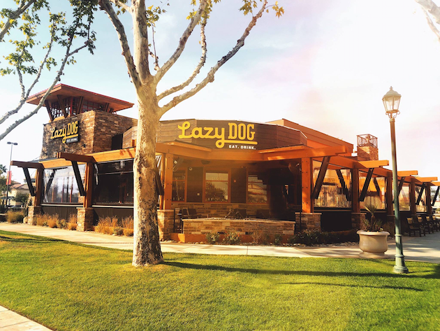 Lazy Dog Restaurant