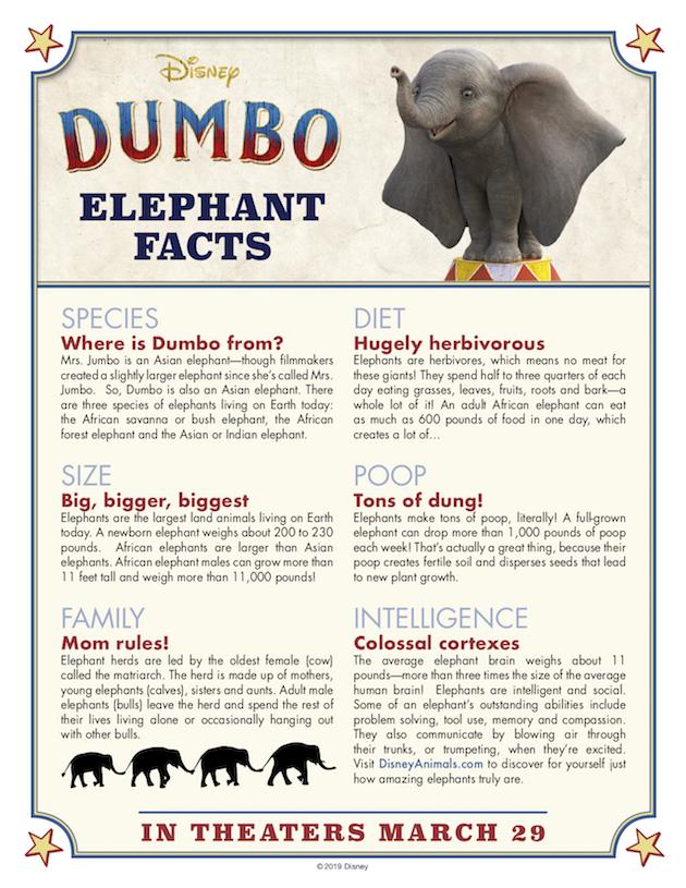 Dumbo Elephant Facts copy