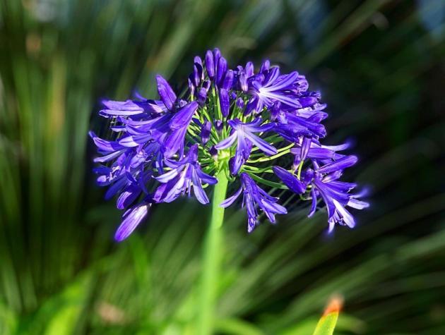 Flower at Glen Ivy