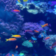 Coral Reefs: Nature's Underwater Cities at the Aquarium of the Pacific