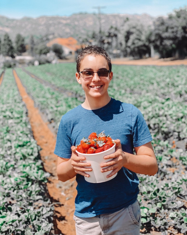 Picking Strawberries on the Farm
