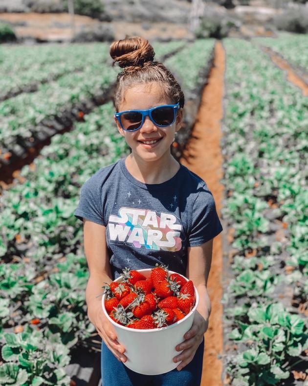 U Pick Strawberries